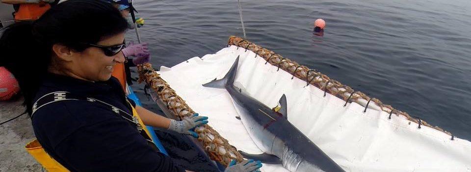 Taller de estadísticas de captura y desembarque de tiburones pelágicos