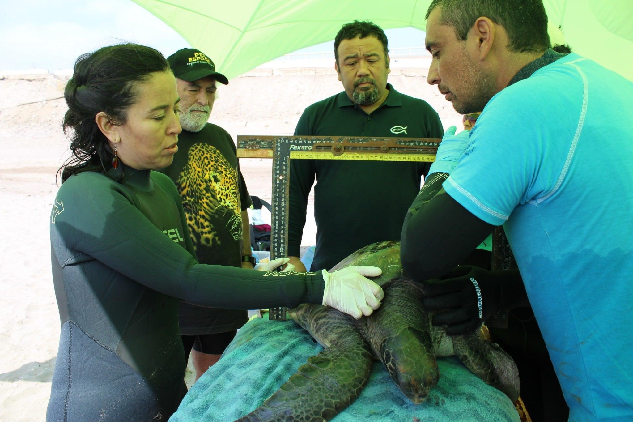 Investigador Jorge Azócar de IFOP invita a participar en  Noche de videos del simposio internacional de tortugas marinas.