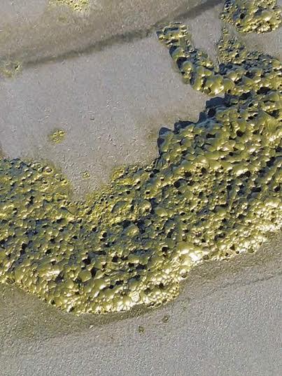 Extraña espuma verde que se observó en cercanías de Ancud no es dañina