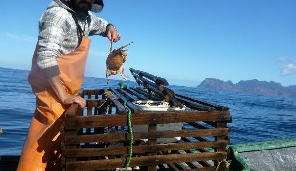 IFOP jointly with University of Concepción are developing an interesting project with crustaceans in Juan Fernandez