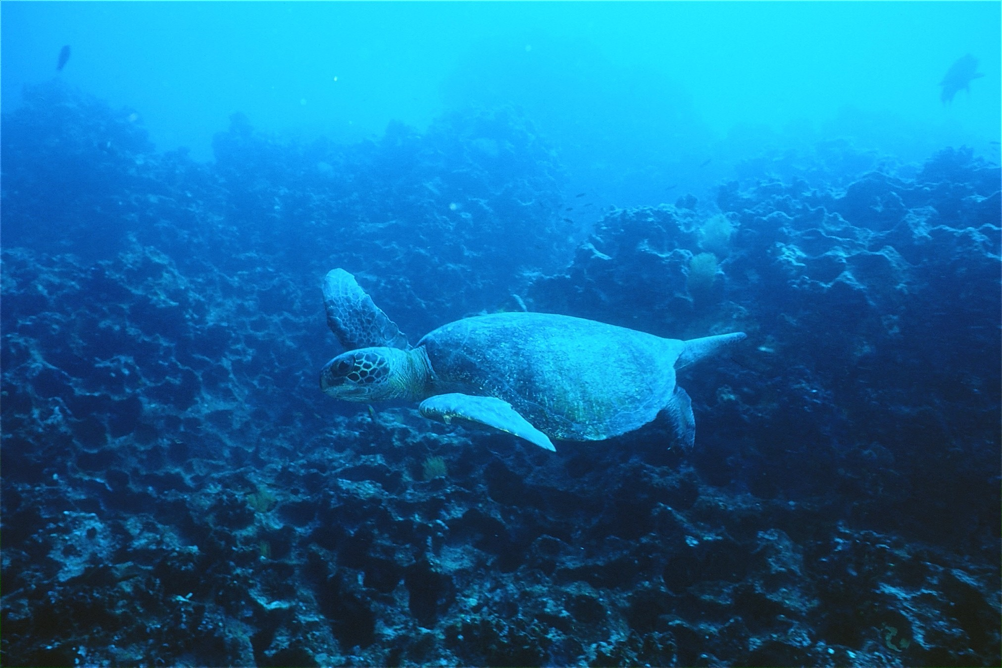 National Group of sea turtle meets to design a national plan of action