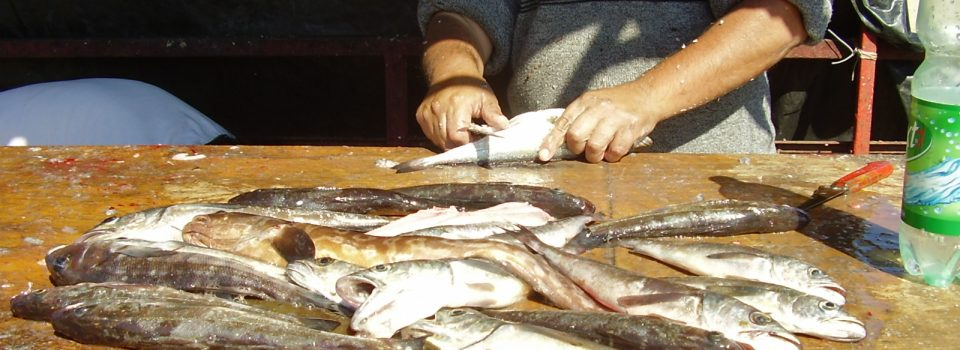 IFOP refers to monitoring study of common hake fishery