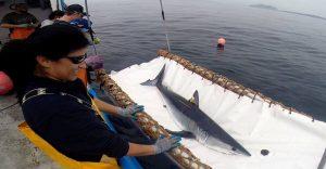 tiburon-en-camilla