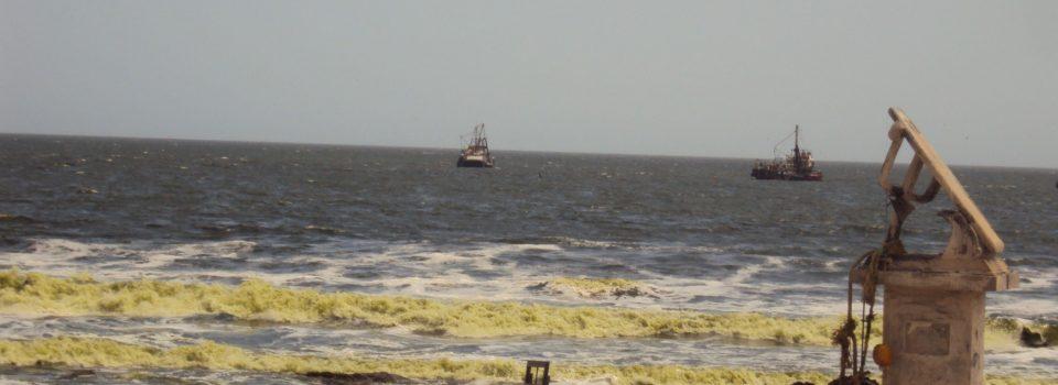 Llamativa discoloración del mar en playa en la ciudad de Arica