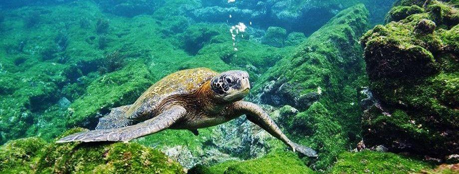 Observadores Científicos de IFOP difunden protección y conservación de tortugas marinas en colegios de Arica