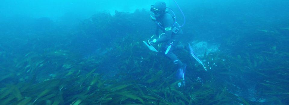 IFOP efectuó taller de algas para uniformar la toma de muestra