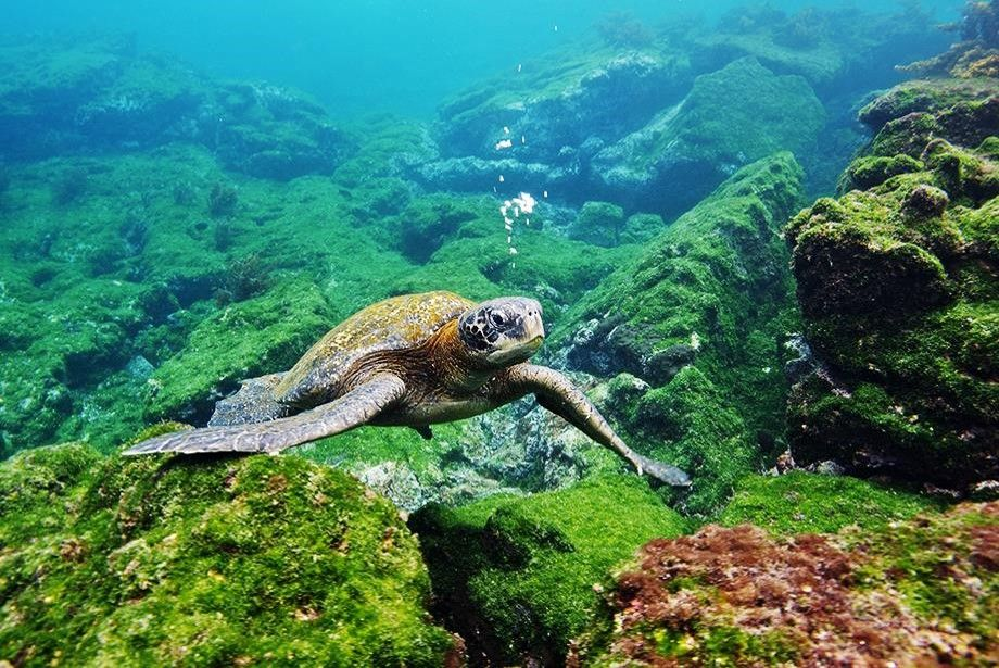 CIT Secretariat highlights Chile's work in sea turtles protection.