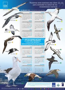 Calendario de aves marinas de la zona sur de Chile