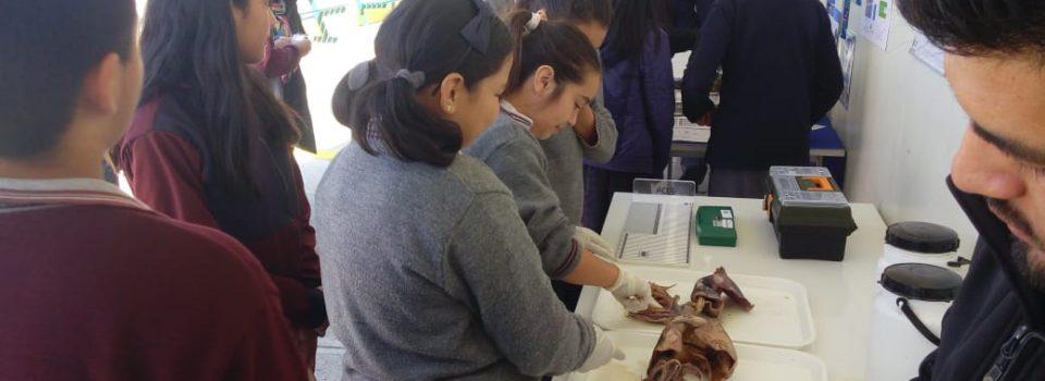 IFOP organiza talleres de difusión con escolares en Talcahuano, Arauco y Coquimbo