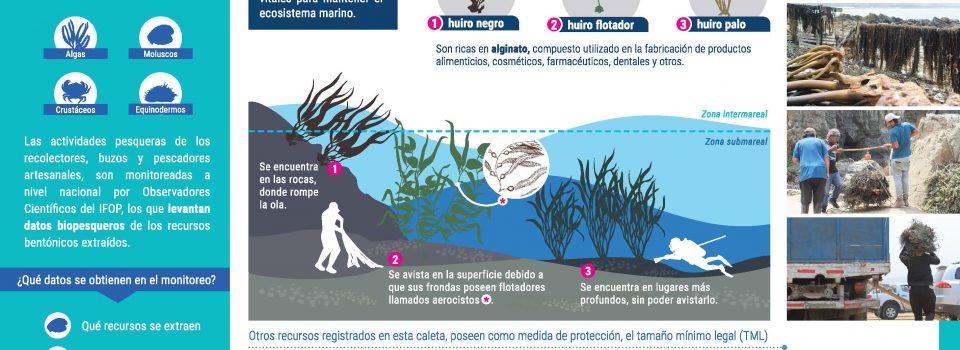 Caletas de Los Molles and Pichicuy Benthic Monitoring Program