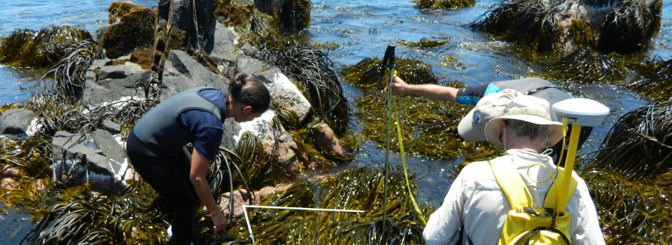 New technologies for brown algae conservation and sustainability in Atacama