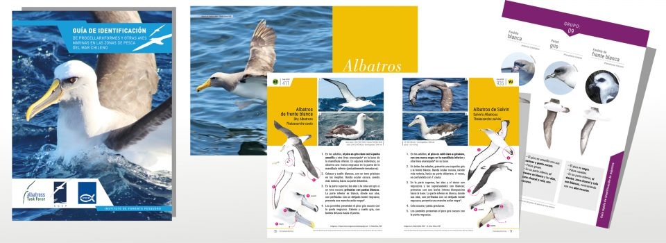 IFOP y ATF Chile desarrollan  Guía de identificación de aves marinas en las zonas de pesca del mar chileno