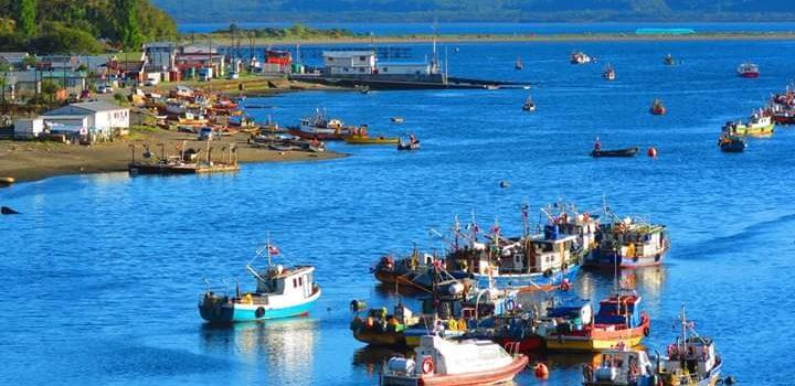 Encuesta busca conocer el impacto del covid-19 en la industria acuícola y pesquera nacional