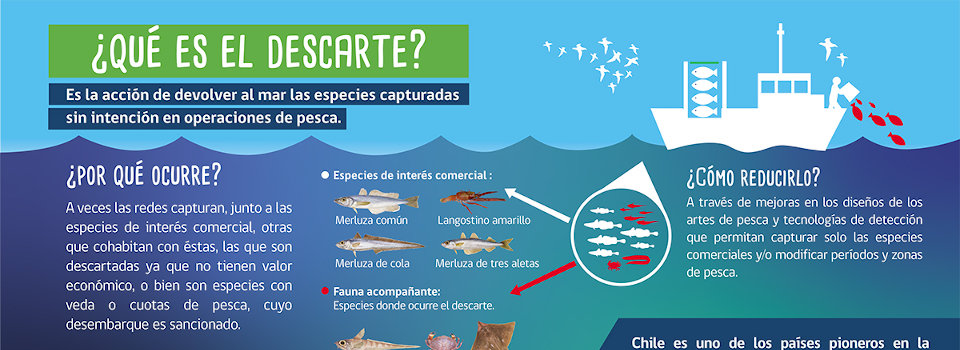 "Researcher Marcelo San Martín participates in ""Sustainable fisheries and zero discard"" virtual talk"