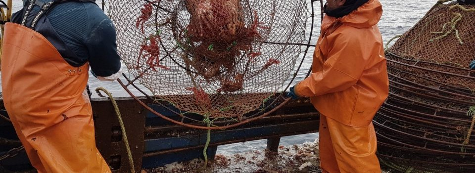 The first advisory project on spider crab between INIDEP and the IFOP of Chile concluded