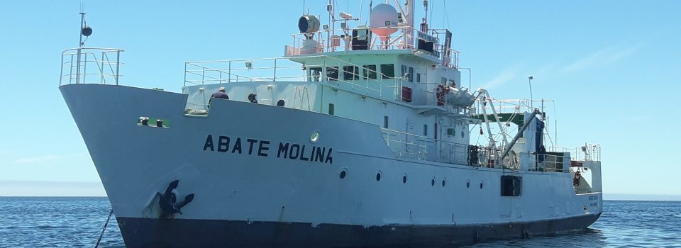 Abate Molina Scientific vessel begins 2021 with a cruise that will investigate anchovy and common sardines