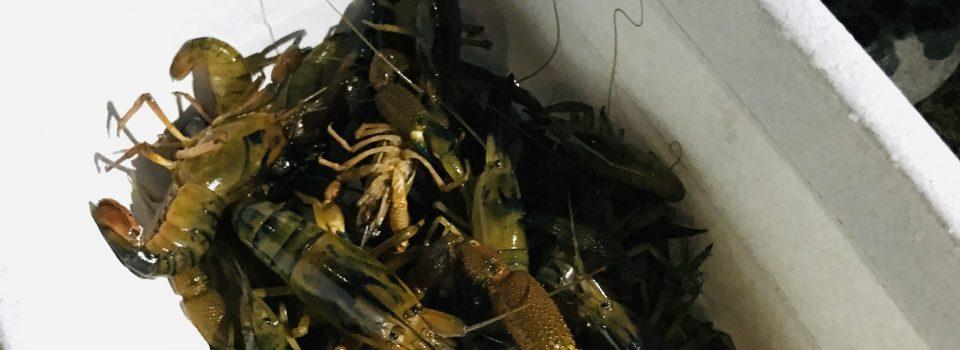 IFOP realiza taller sobre camarón de río
